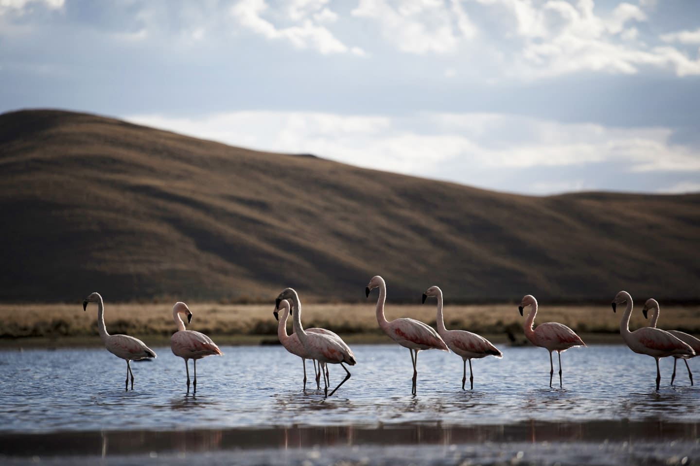 flamingos, birds, animals, nature, lake, landscape, cute - Lagunillas
